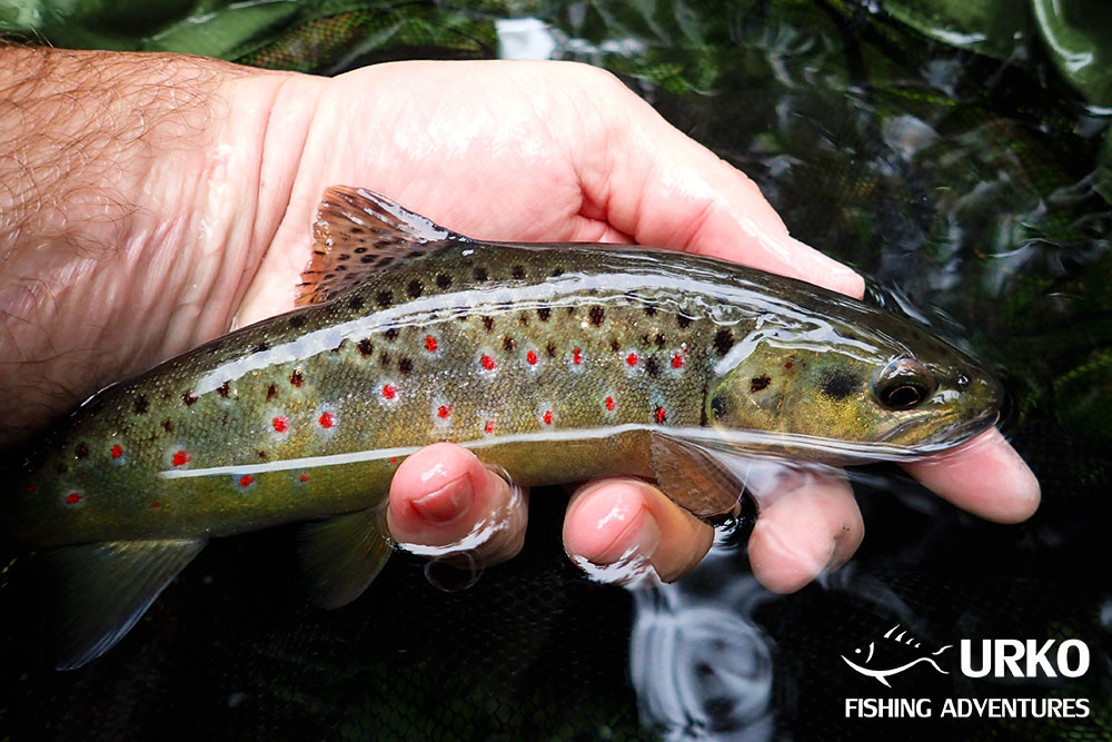 Urko Fishing Adventures Fly Fishing Slovenia